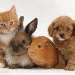 Опасные любимцы: какие домашние животные способны нанести вред здоровью