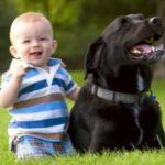 Присутствие в доме животных укрепляет здоровье детей