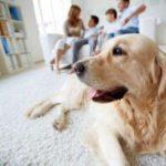 Какая польза от собаки для гармоничного психологического состояния ребёнка