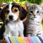 Ученые: домашние животные повышают качество сна